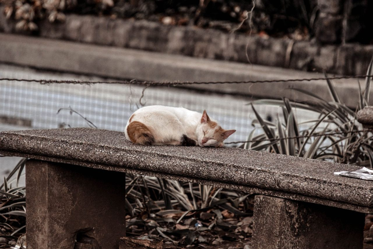 homeless kitty.jpeg