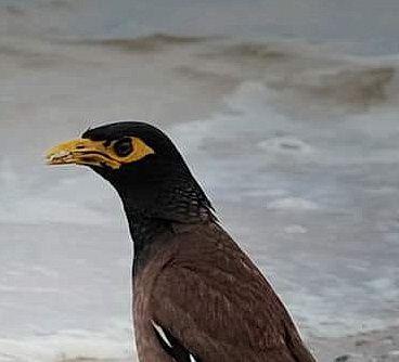 bird_15u.jpg