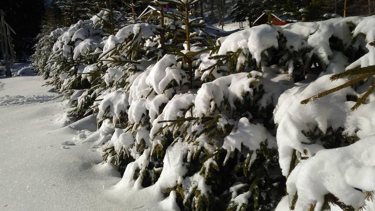 winter12.jpg