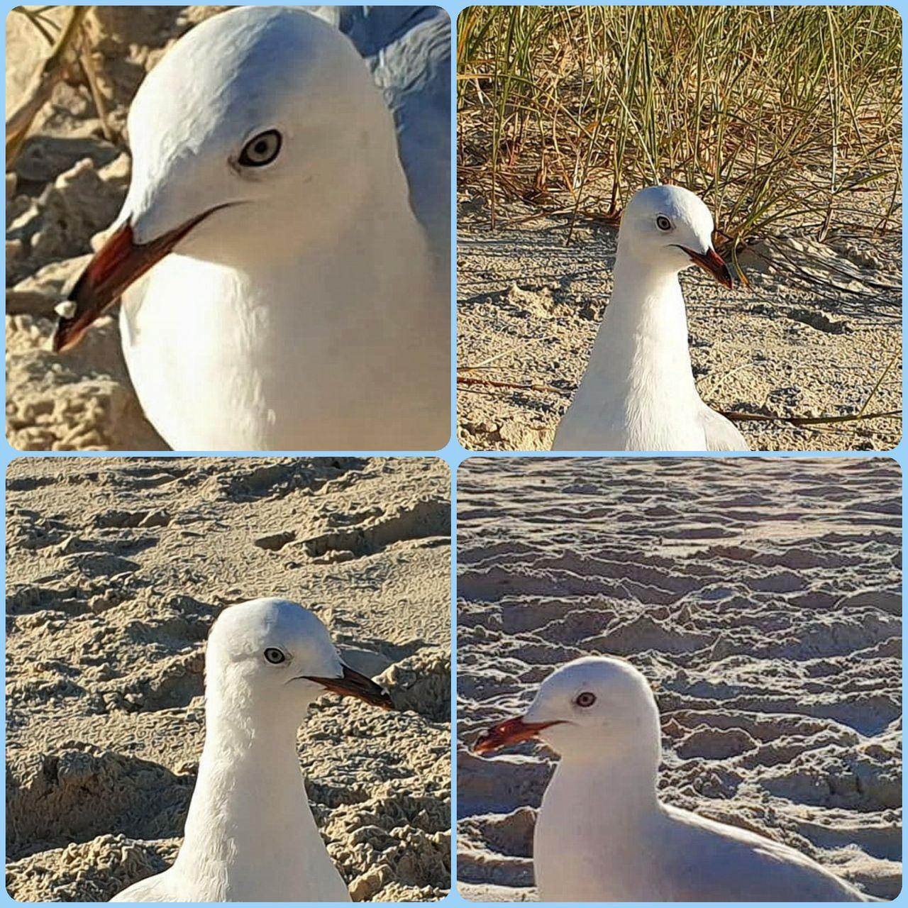 bird_10u.jpg