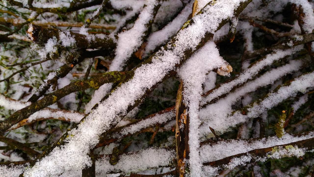 winter19.jpg