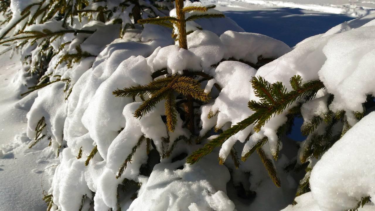 winter11.jpg
