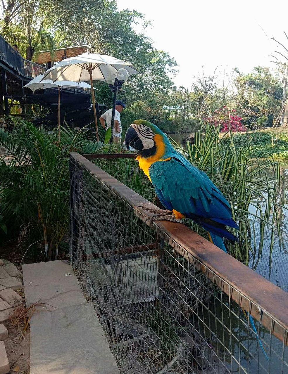 bird_30u.jpg