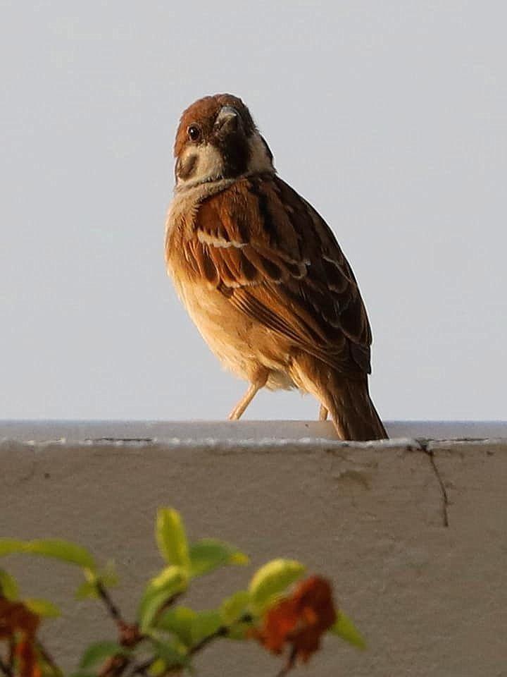 bird_33u.jpg