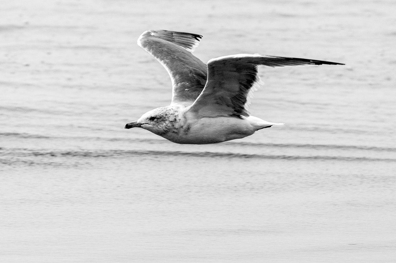 flying_over_water_2.jpg