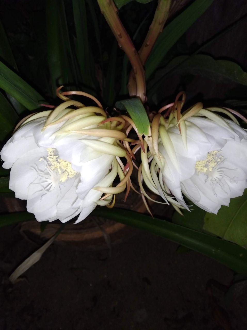 Flor8.jpg