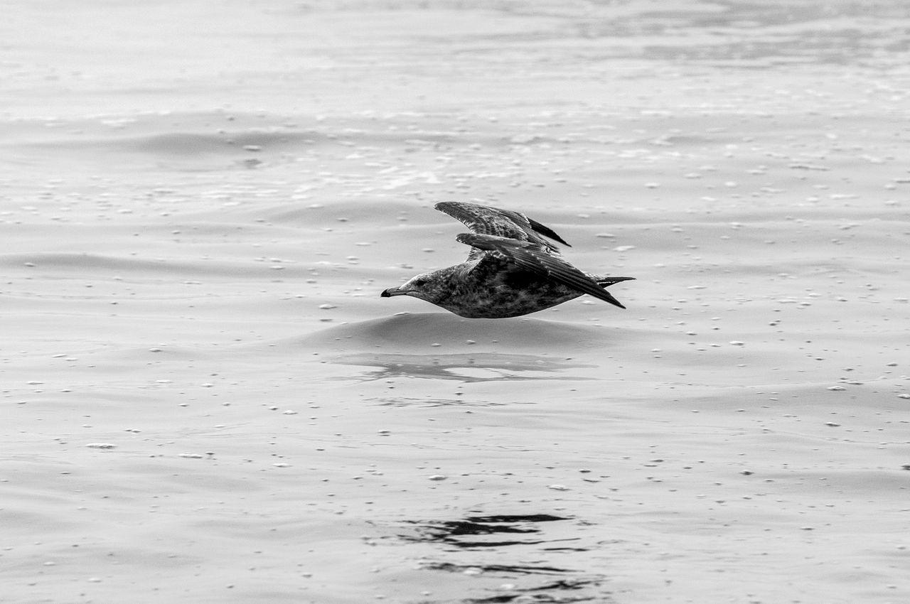 flying_over_water_1.jpg