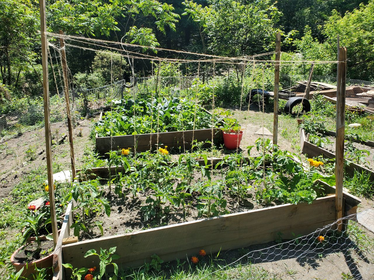 last year garden.jpg