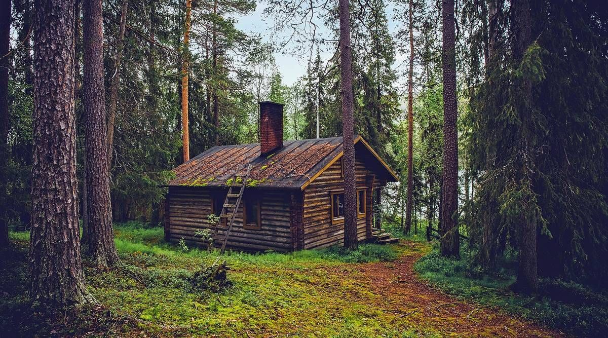 pixabay_forests_tree-house-1200.jpg