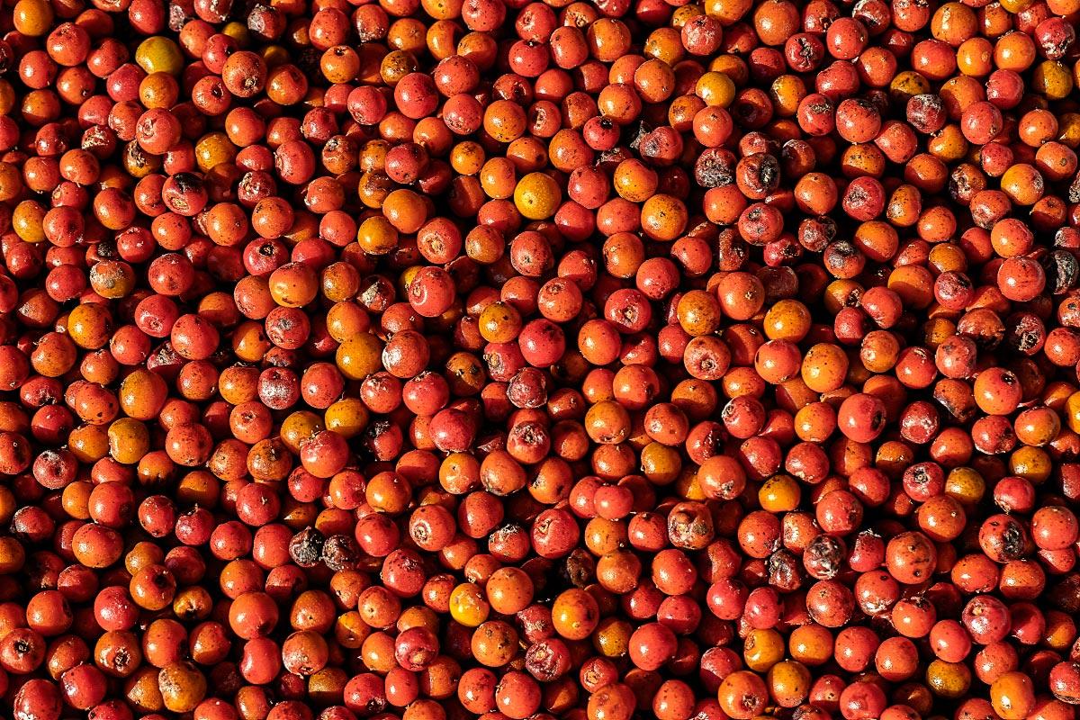 Perfectly ripe pepper berries taste the sweetest.