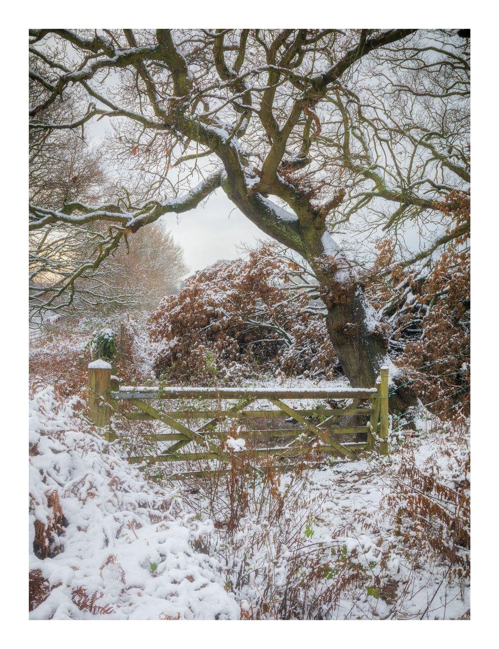 01Winter Gate - © Kieran Metcalfe Bdr.jpg