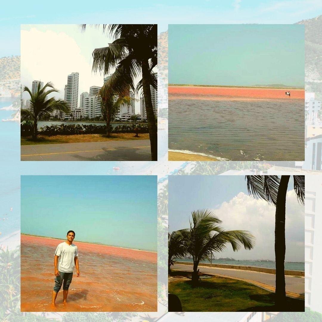 Amarillo Dorado Marrón y Verde Collage Post para Instagram.jpg