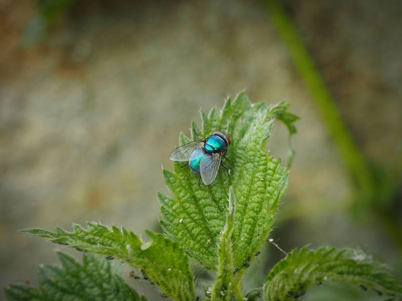 комахи 3.jpg