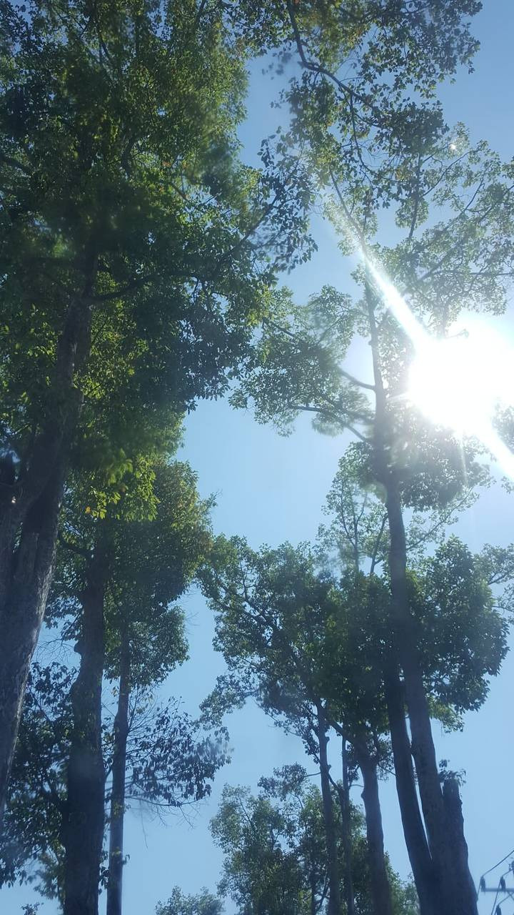 TreeSpirits7.jpg