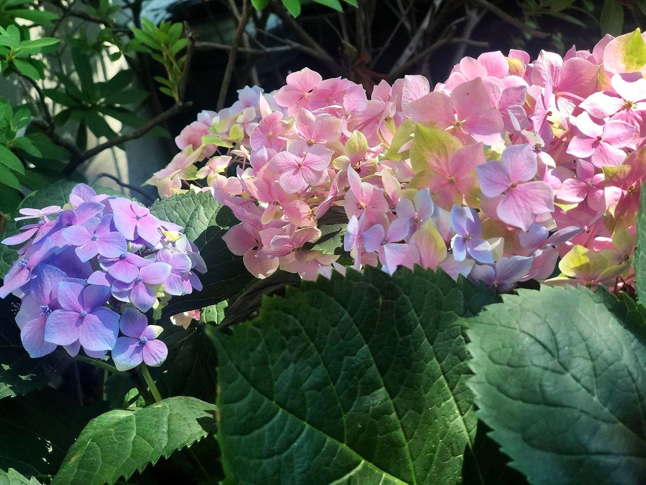 flower_122u.jpg