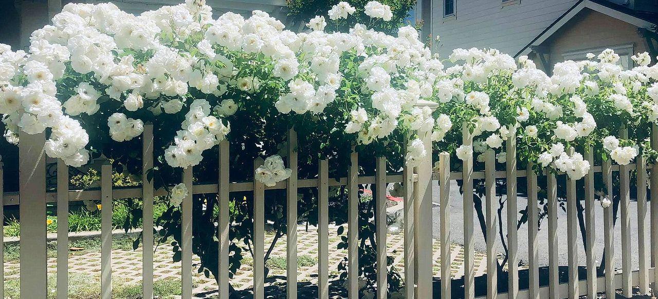 flower_110u.jpg