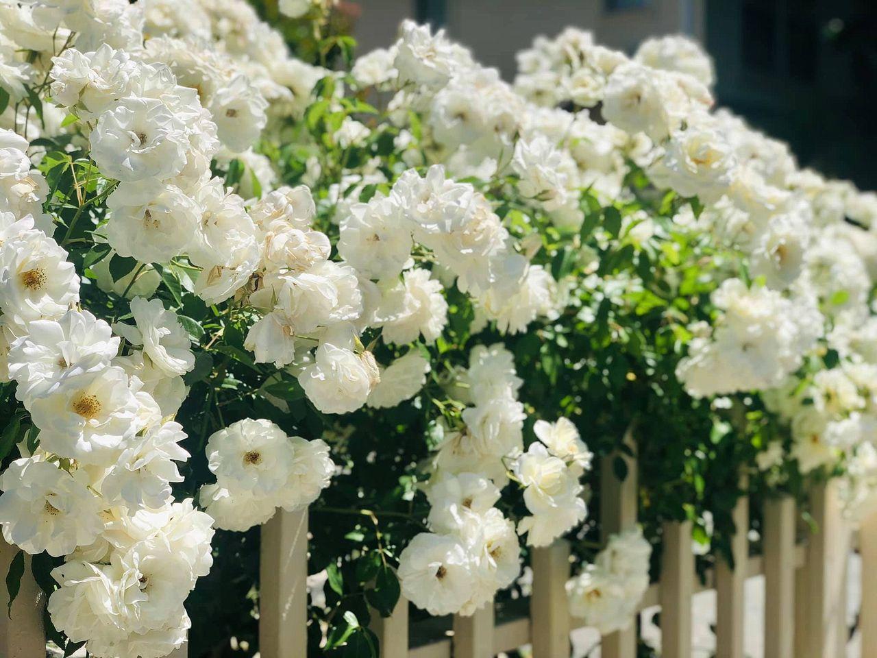 flower_109u.jpg