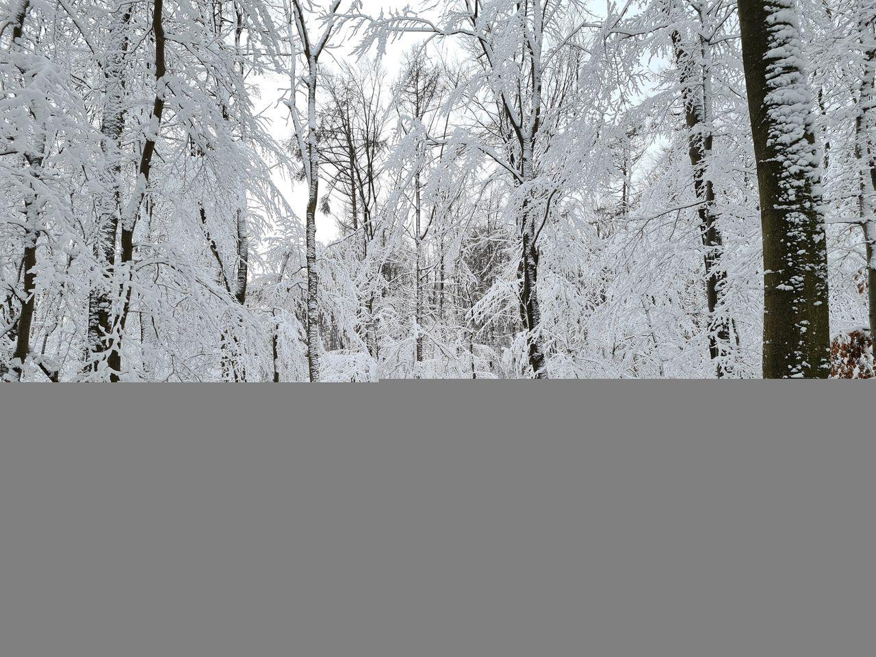Schnee (5).jpg