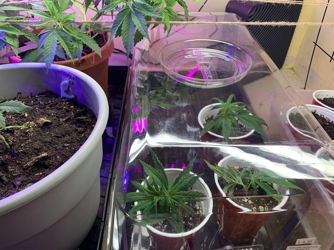 grow2021-022.jpg