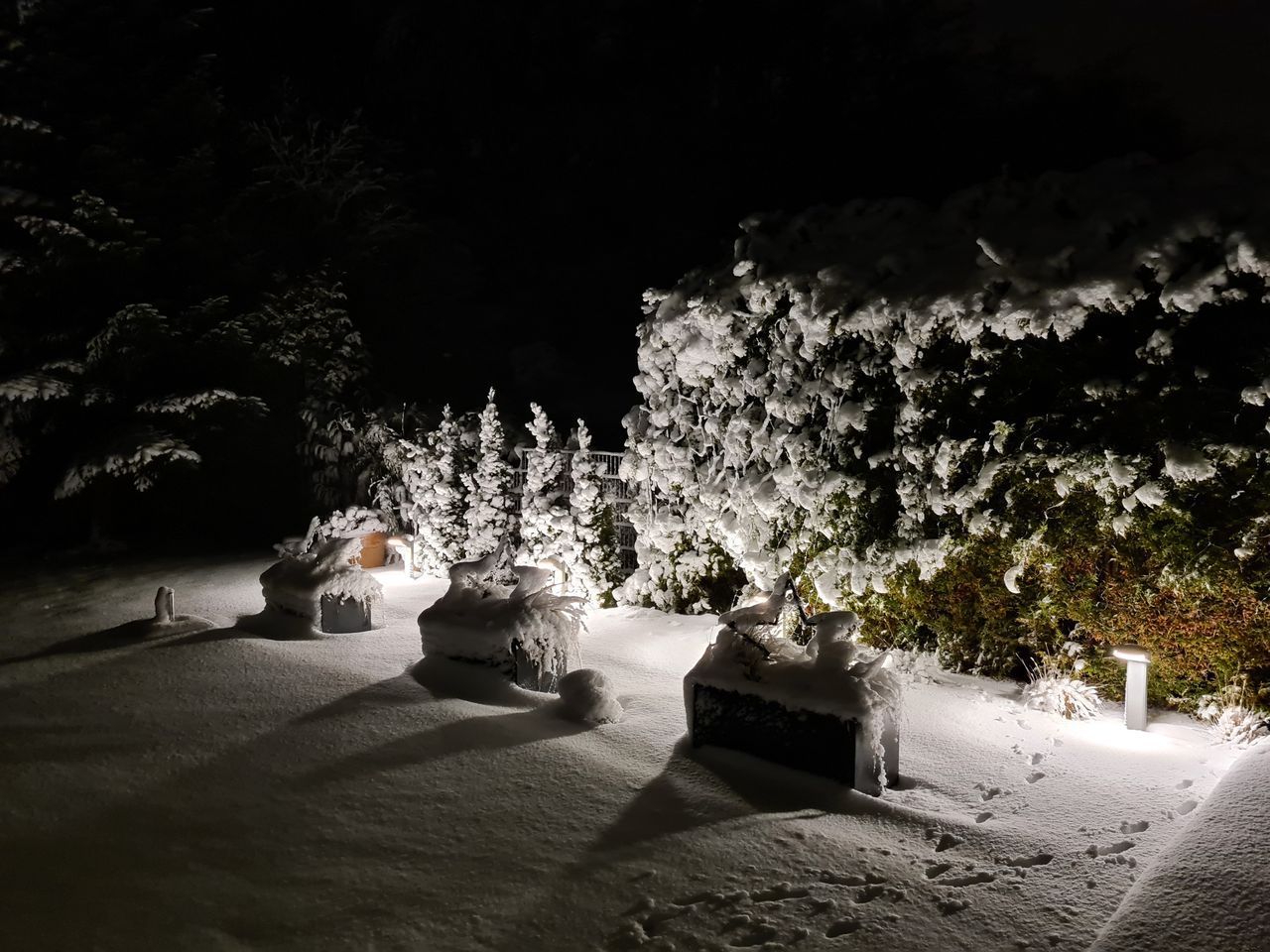 Schnee (2).jpg