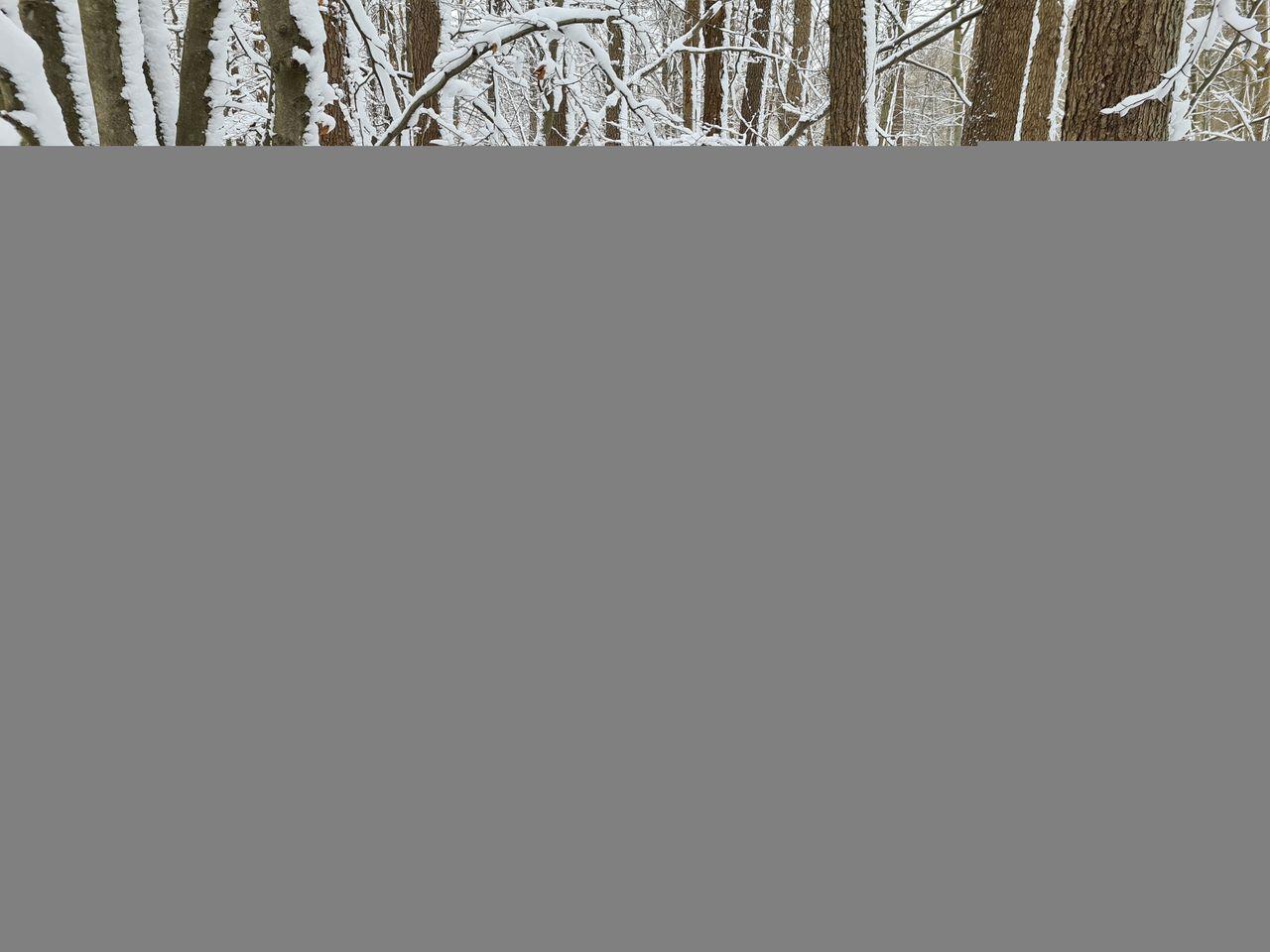 Schnee (4).jpg