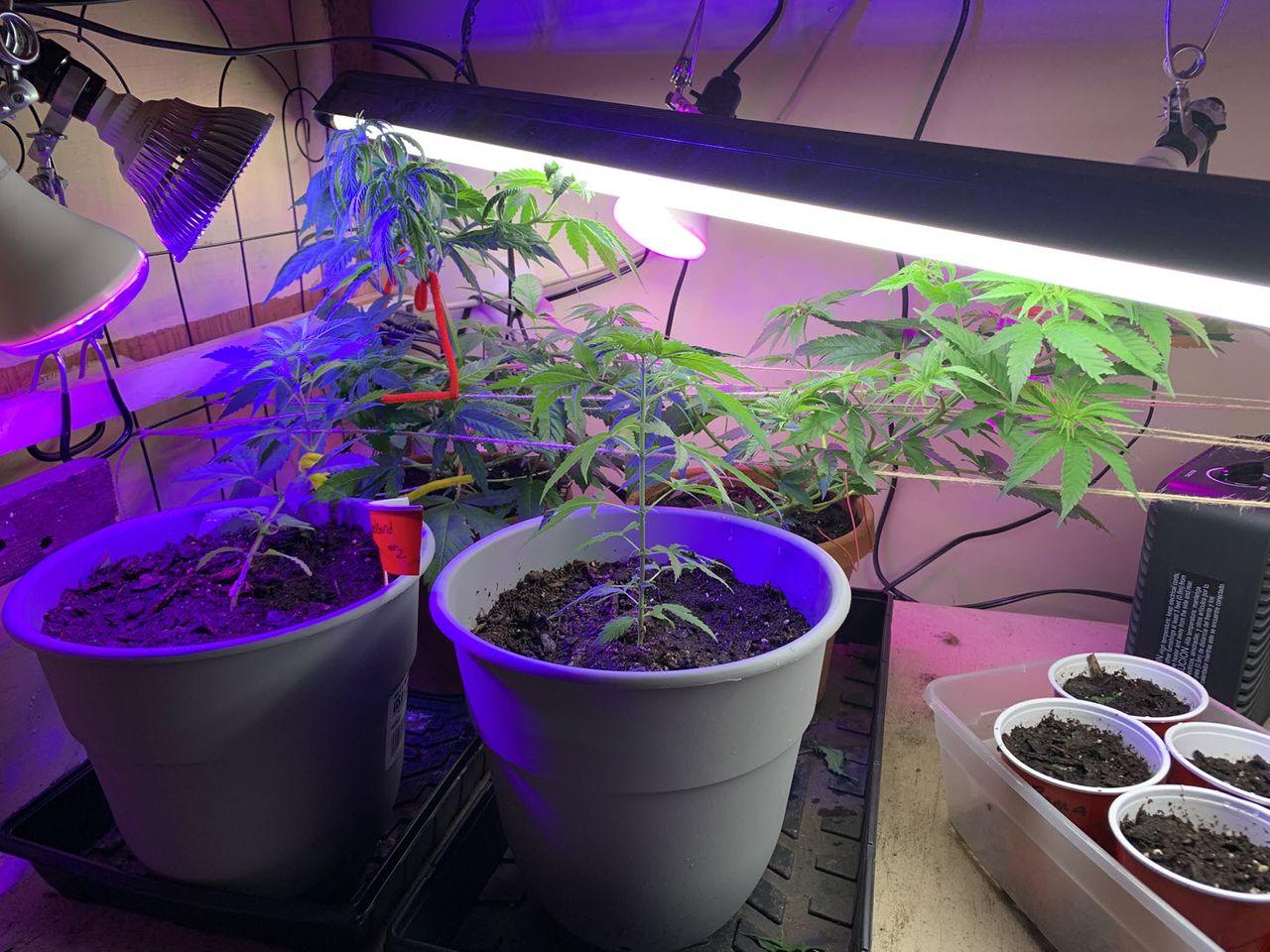 grow2021-001.jpg
