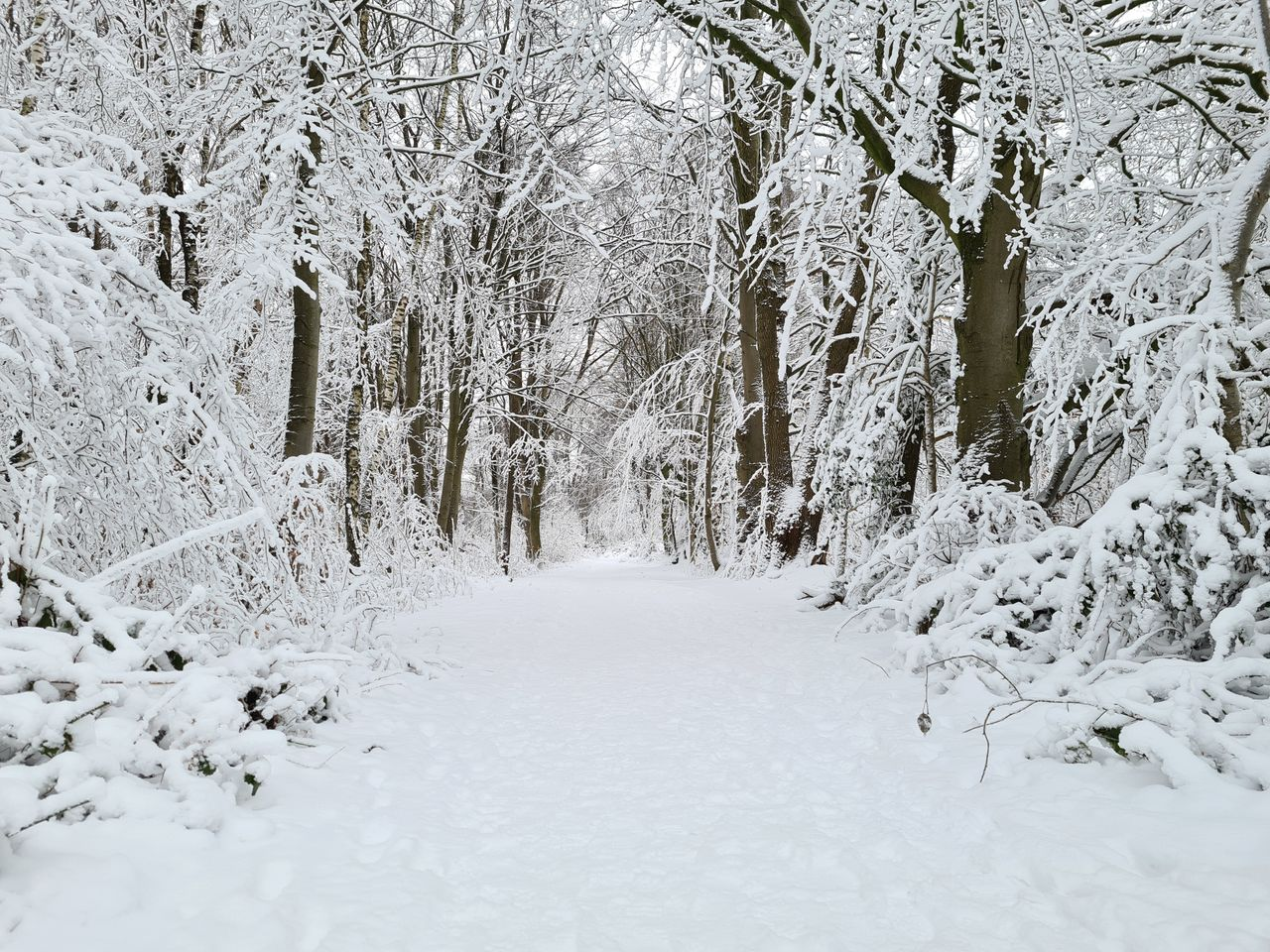 Schnee (3).jpg