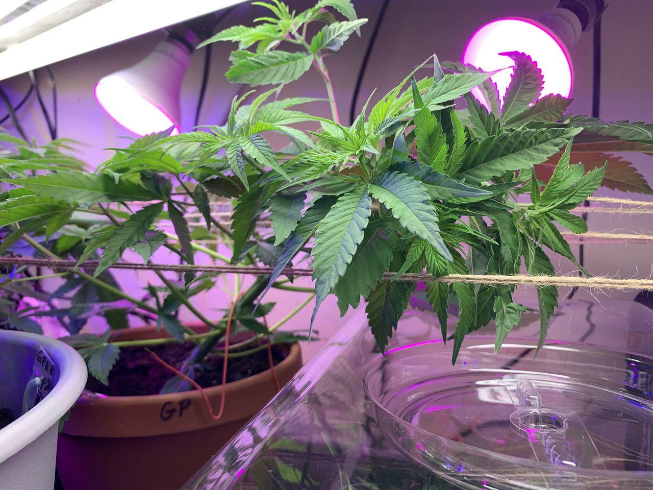 grow2021-012.jpg