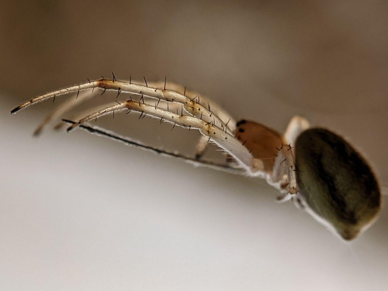 spider (4).jpg