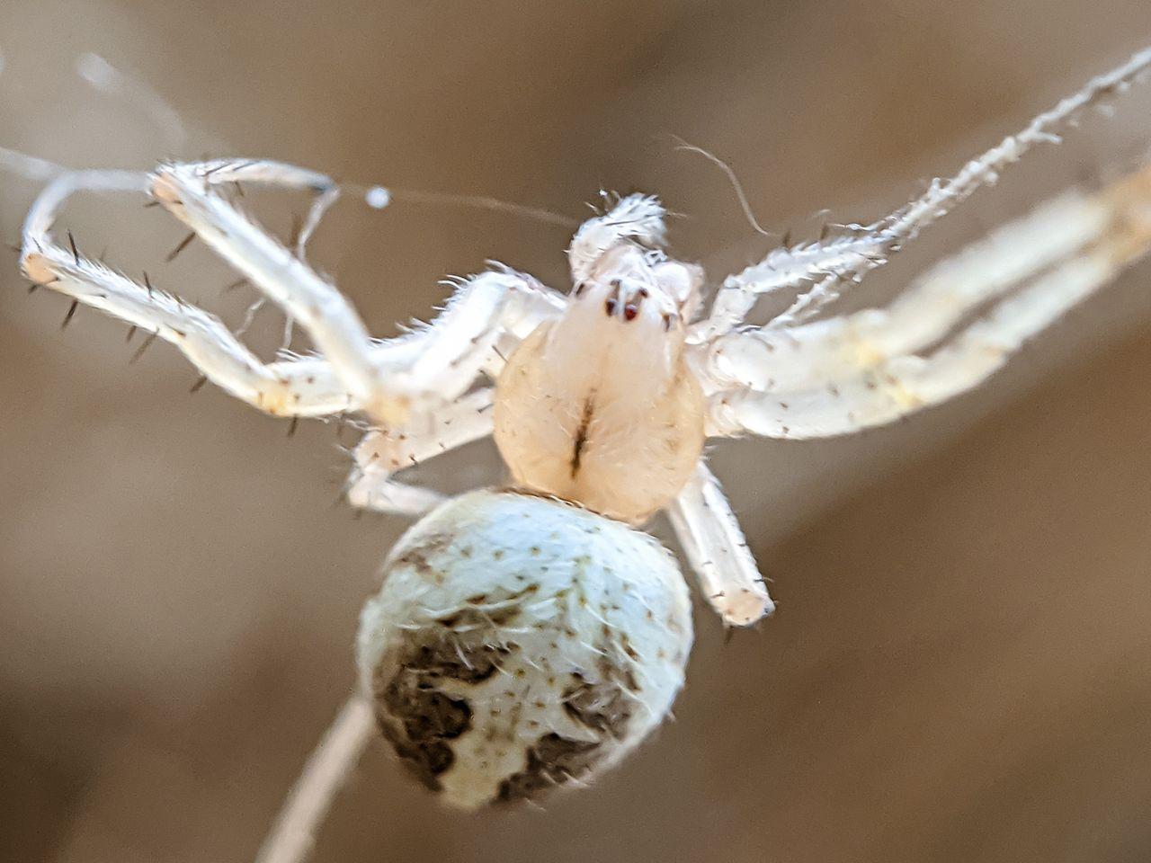 spider (7).jpg