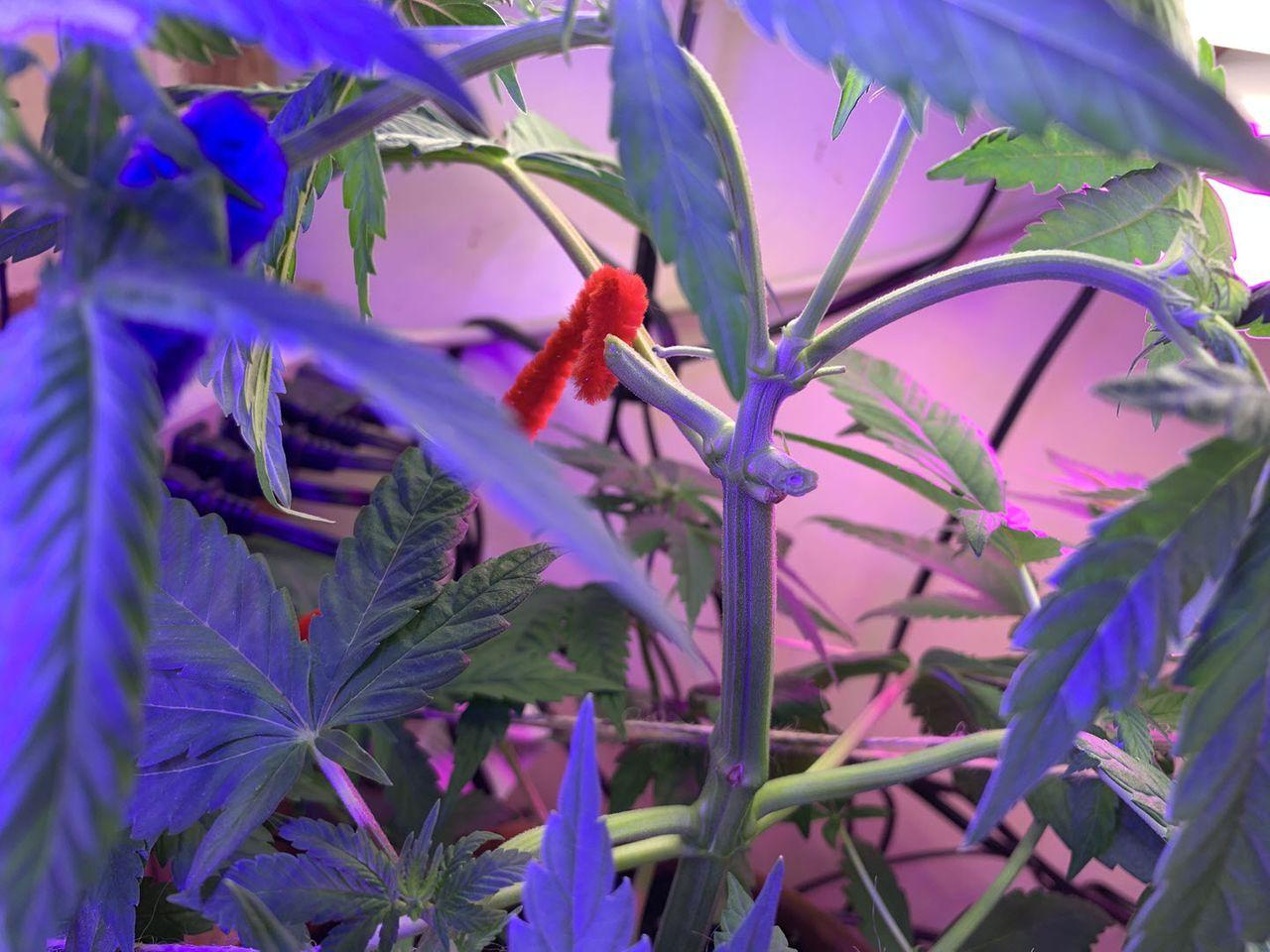 grow2021-003.jpg