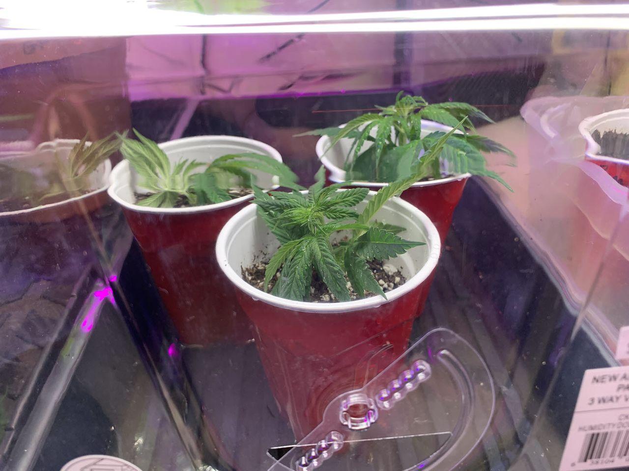 grow2021-004.jpg