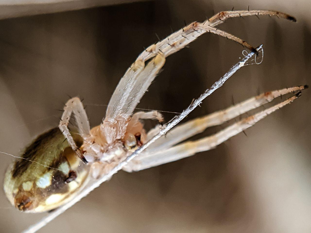 spider (1).jpg