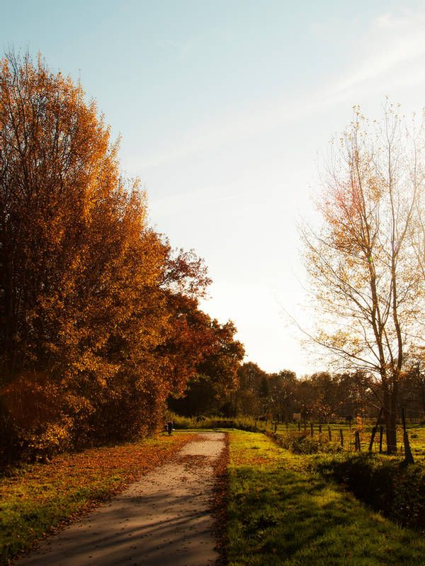 autumn picture playfulfoodie