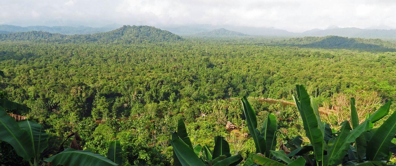 one-tribal-hut-sepik-province-karawari-papua-new-guinea-tropical-rainforest-tribe-tribal-culture-holiday-vacation-tour-birdwatching-photography-ralph-pannell.jpg