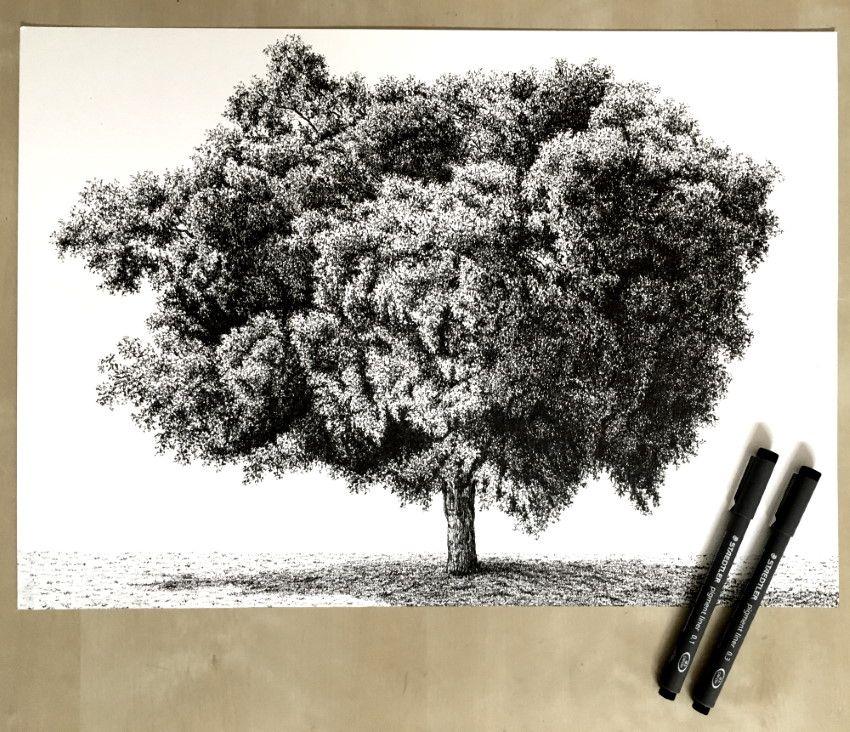 ficus_tree_pen_drawing.jpg