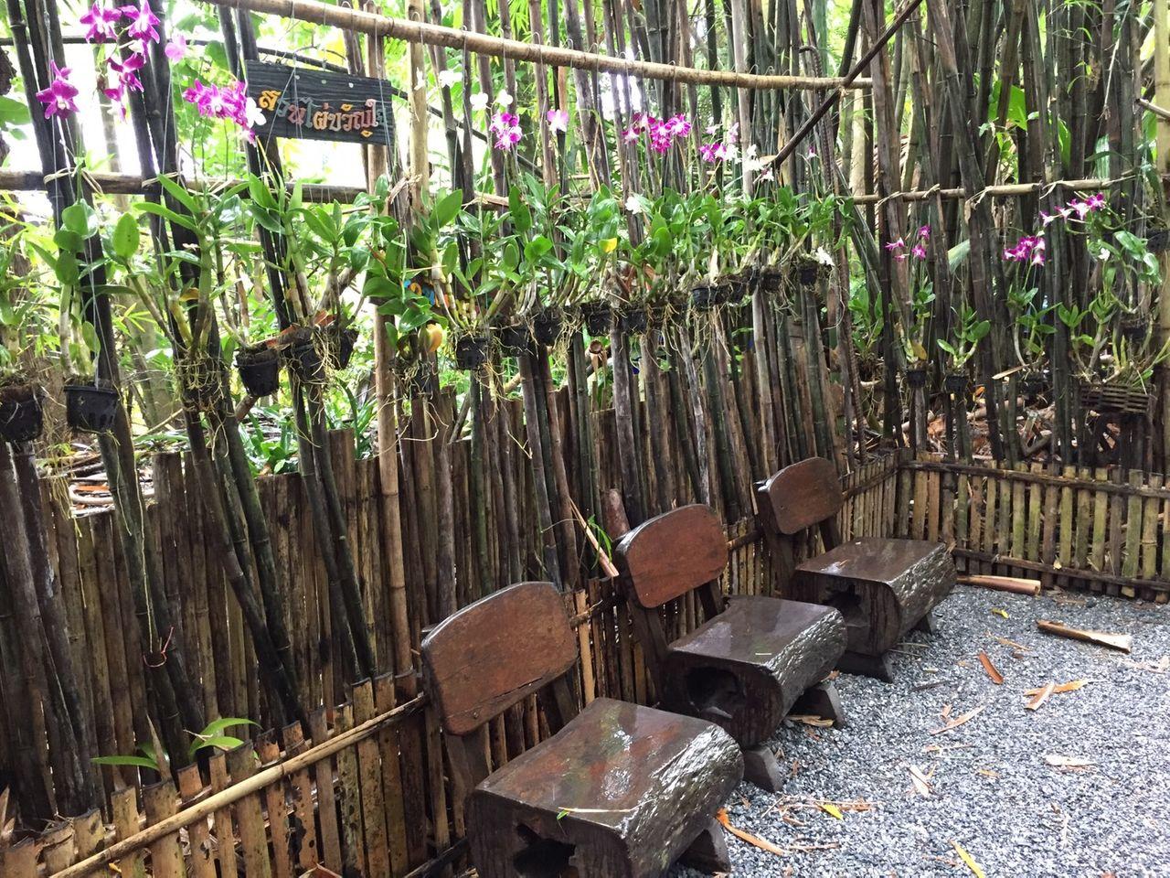 kwanjai_bamboo_garden8.jpg