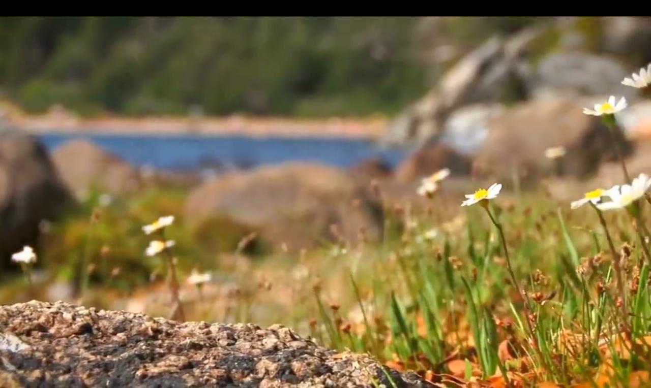 41.-Lago-Hermoso-flores.png