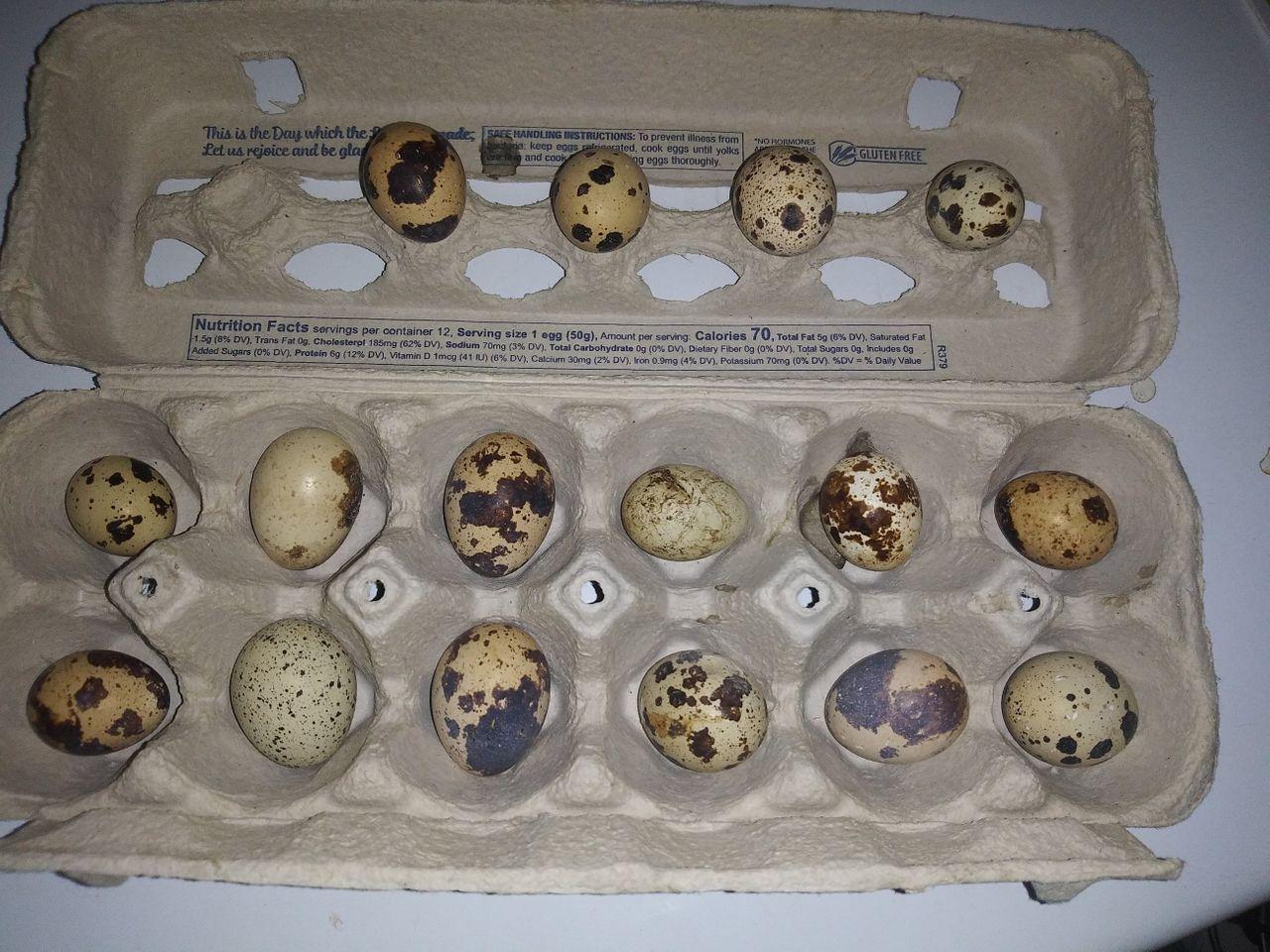 big catch of eggs.jpg