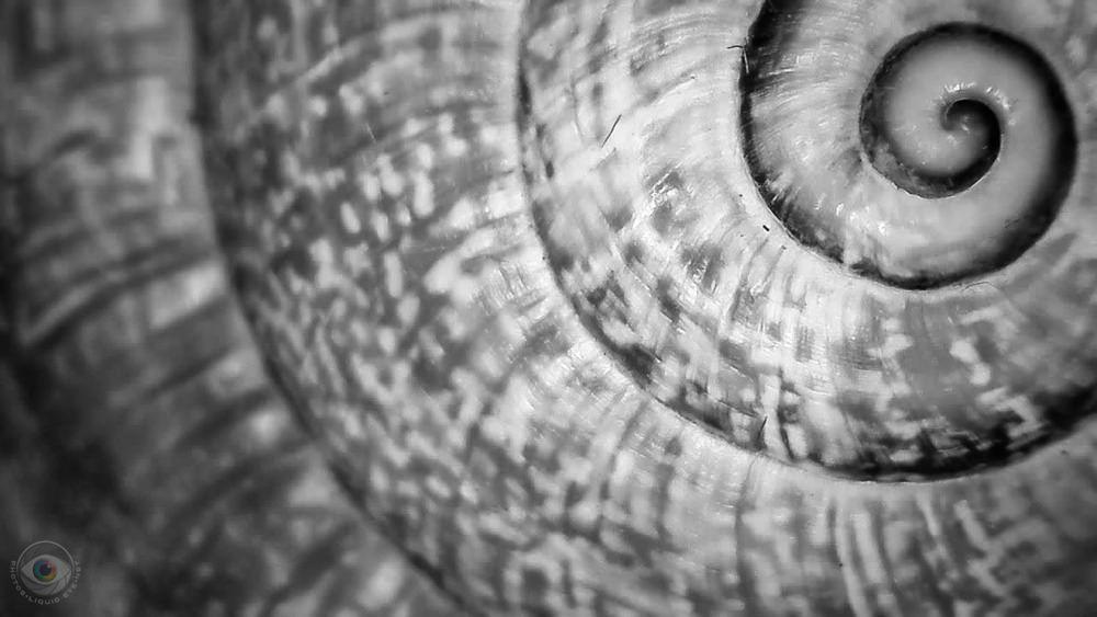 Snail House Spiral