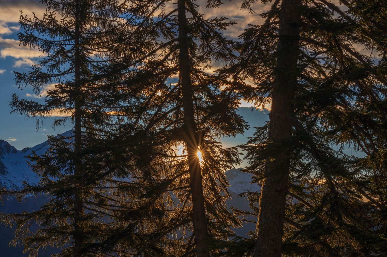 Hiking, Wild Camping & Alpenglow : Sunrise behind the trees