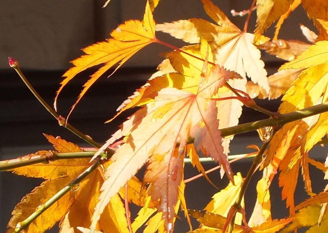 0821-Leaves.jpg