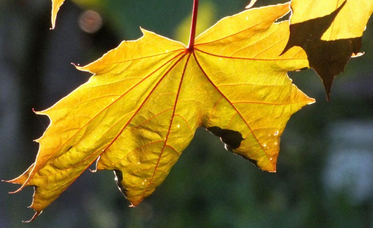 0804-Leaf.jpg