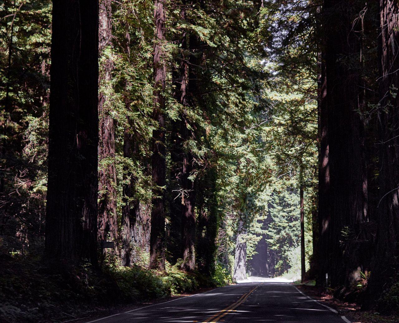 Redwoods027-2.jpg