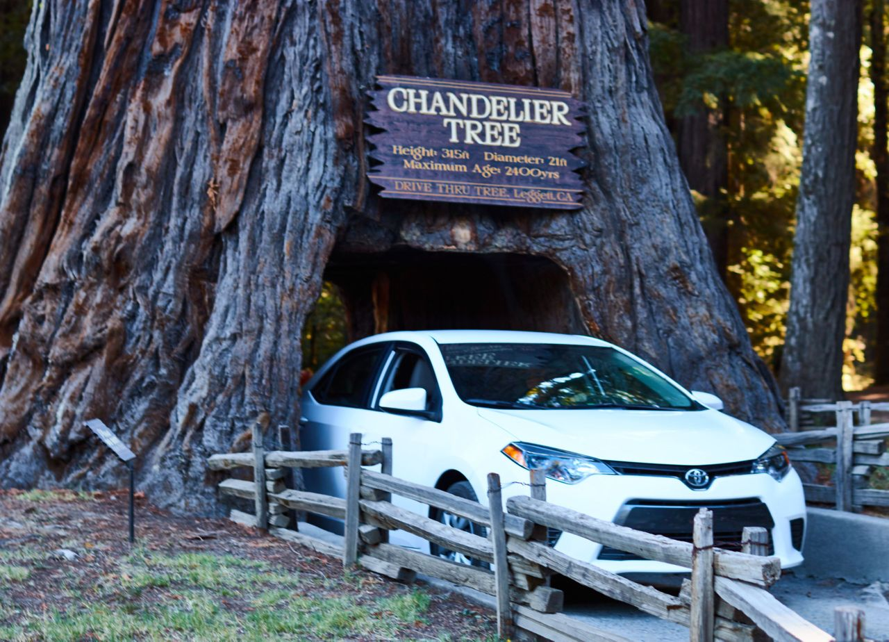 Redwoods006.jpg