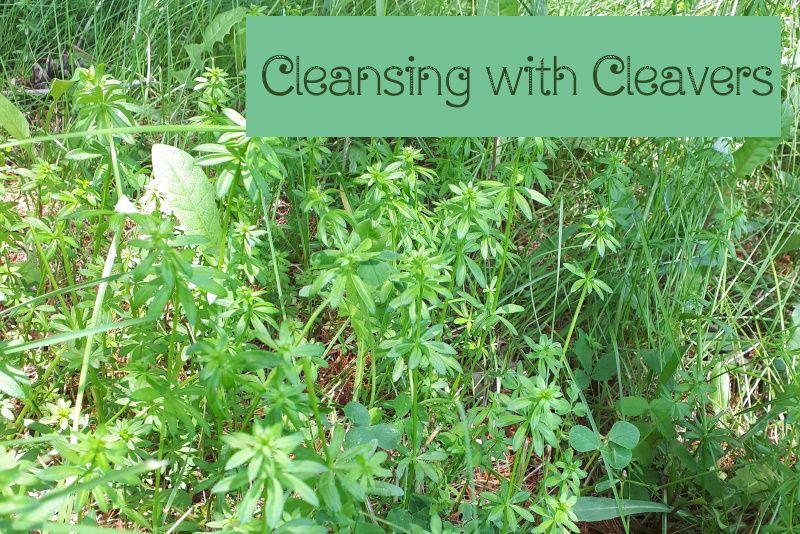 cleavers_title.jpg
