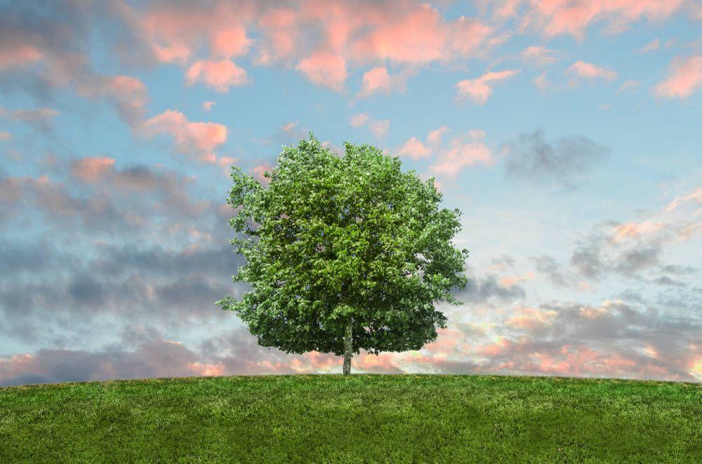 pexels_tree_01.jpg