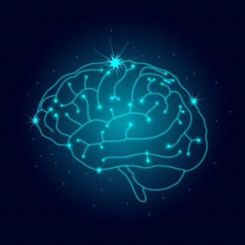 brain smaller.jpg