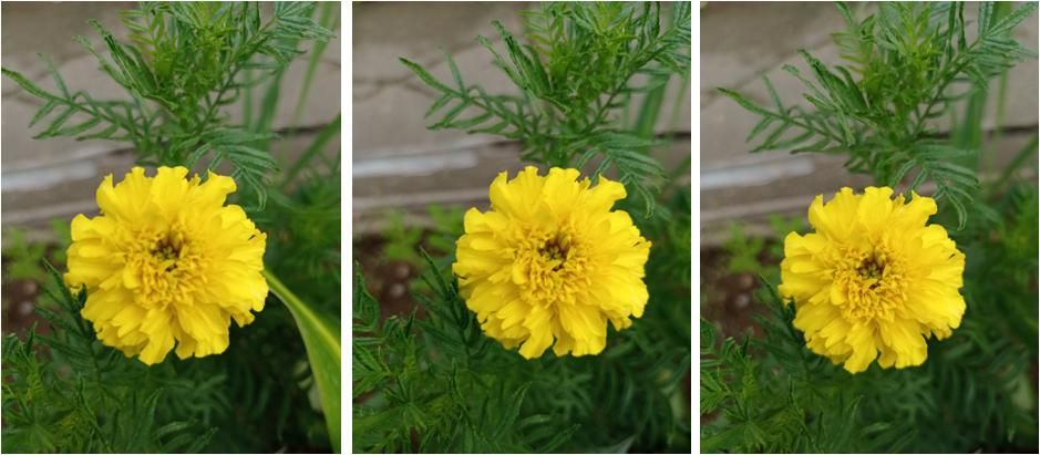 Flor Amarilla.JPG