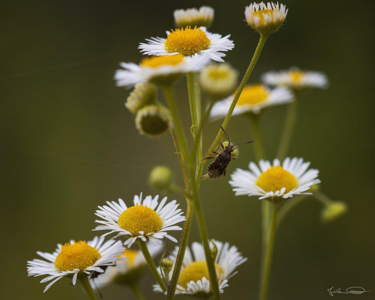 Hive AlphabetHunt Lygaeidae